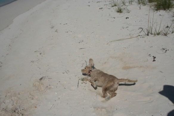 Sand worshiping!