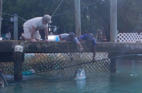 People feeding tarpon by hand in the Everglades.