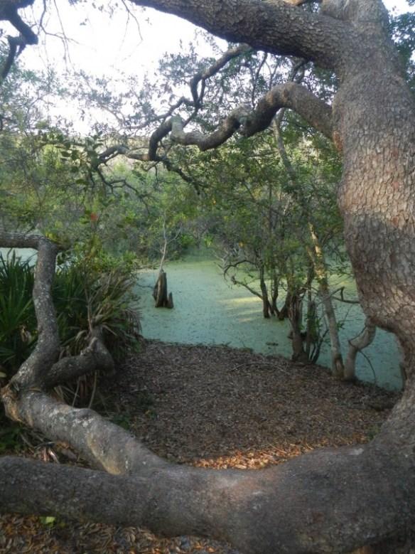 Gator Lake