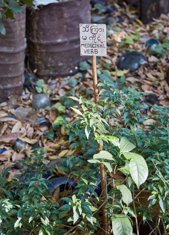 Myanmar Medicinal Herb Garden