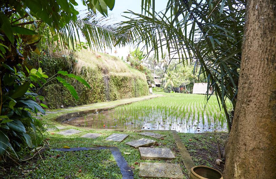 Traditional Balinese Garden