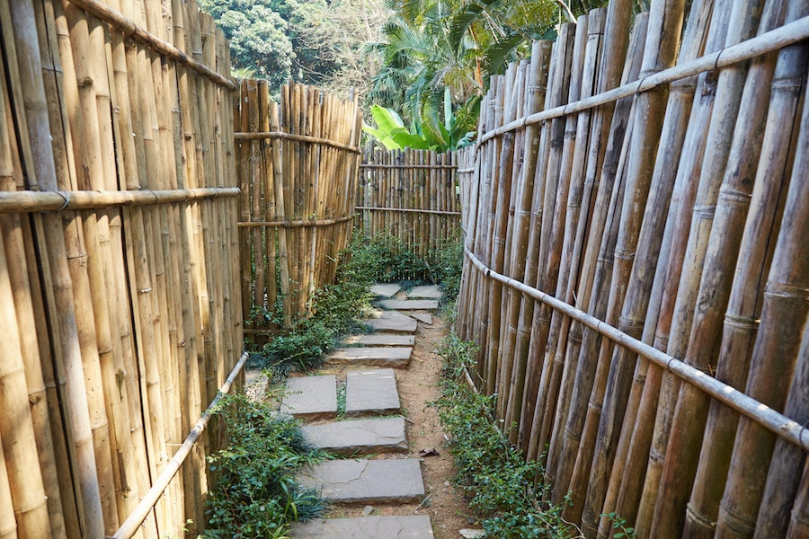 Bamboo Maze