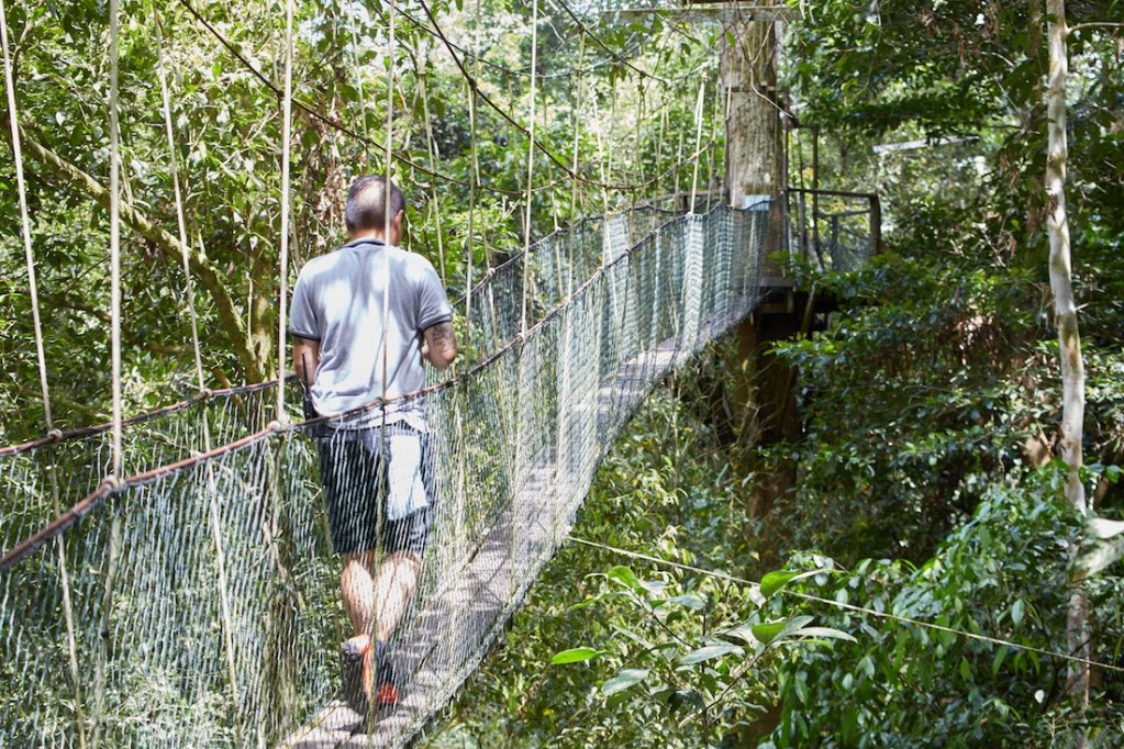 Mulu National Park Canopy Walk