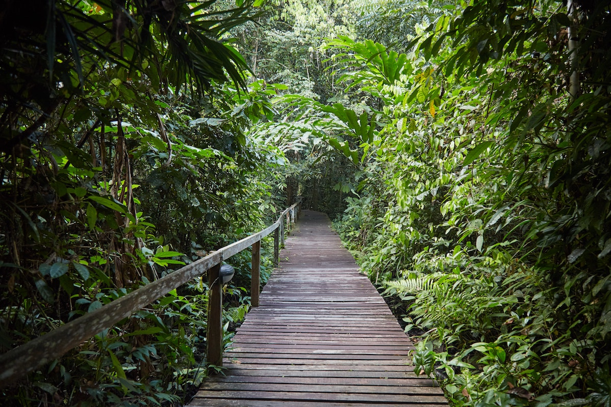 Mulu National Park Trails