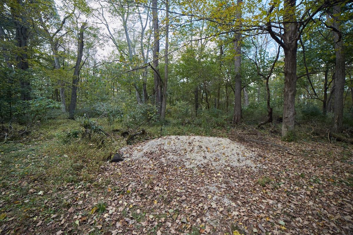 Glen Helen Nature Preserve Ohio
