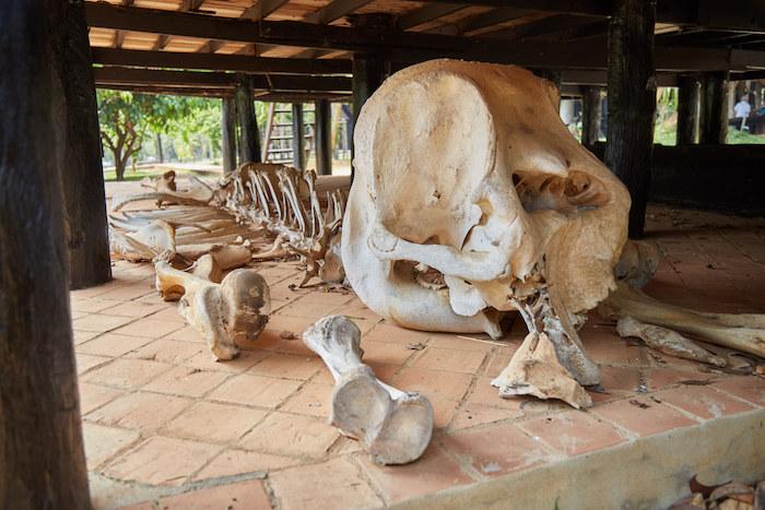 Thawan Duchanee Bones