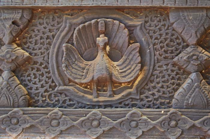 Myanmar Peacock