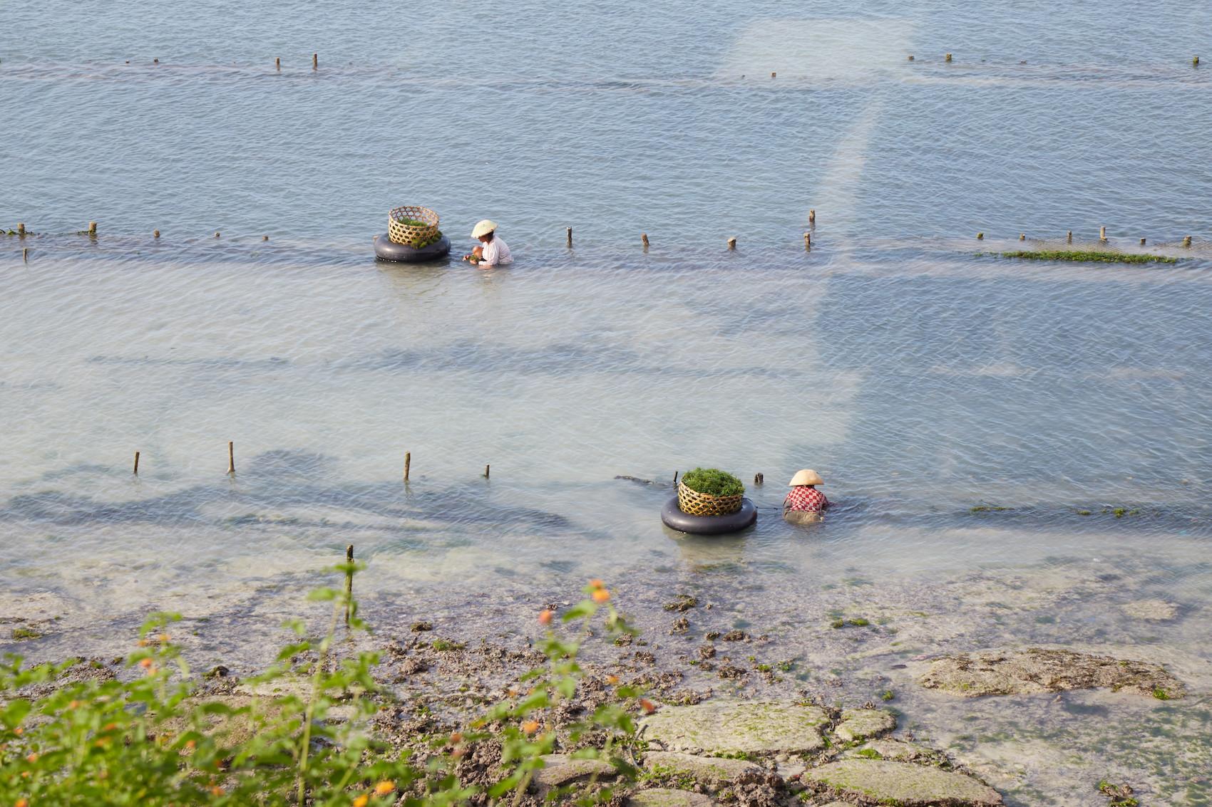 Nusa Penida Seaweed Cultivation