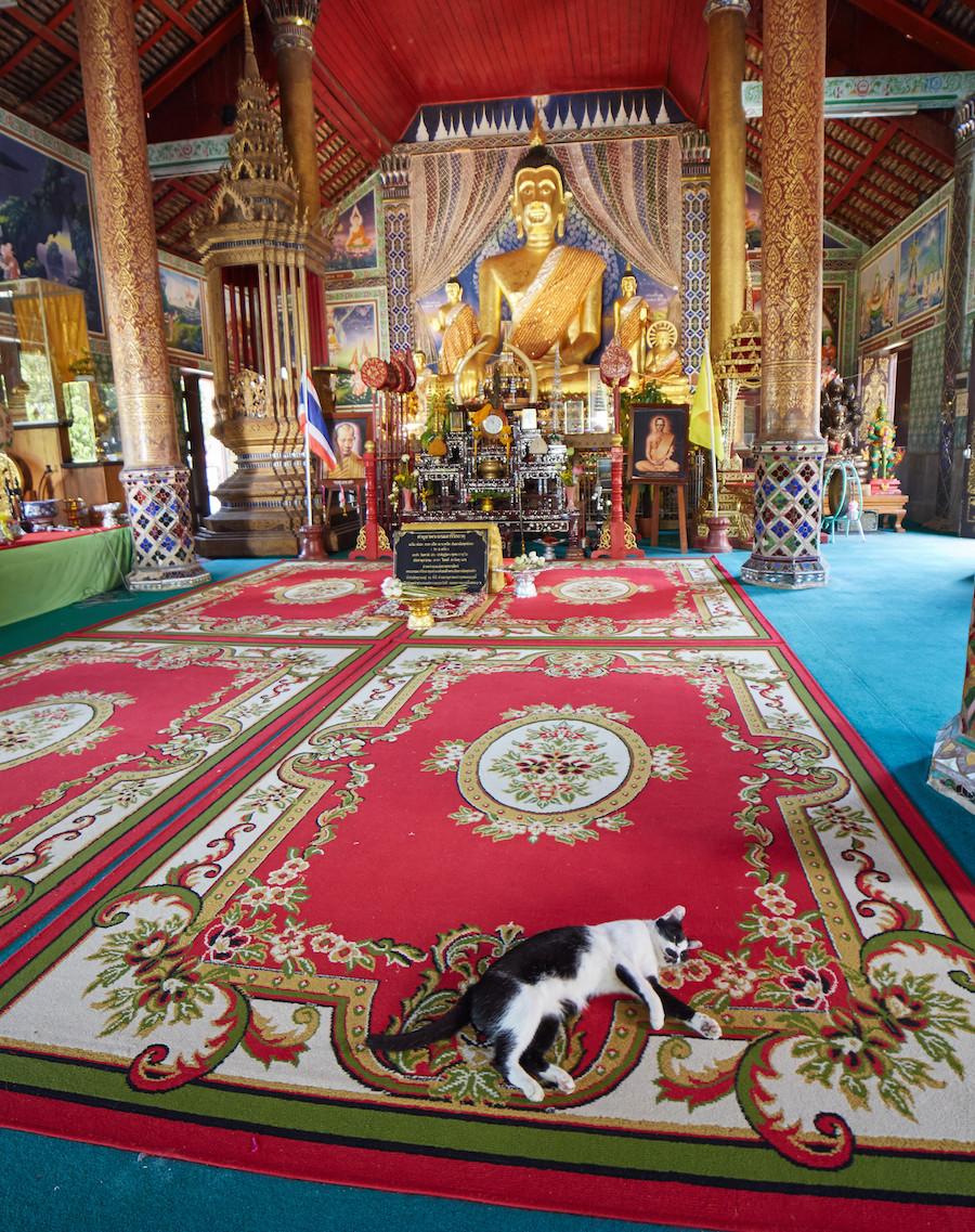 Lampang Chedi Temple Cat