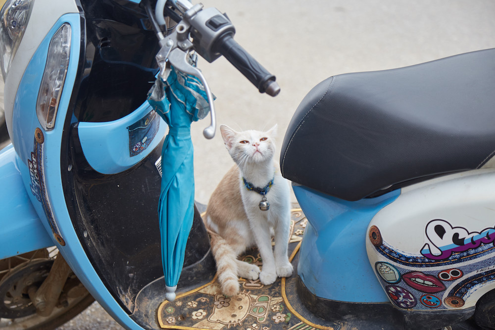 Cat Scooter