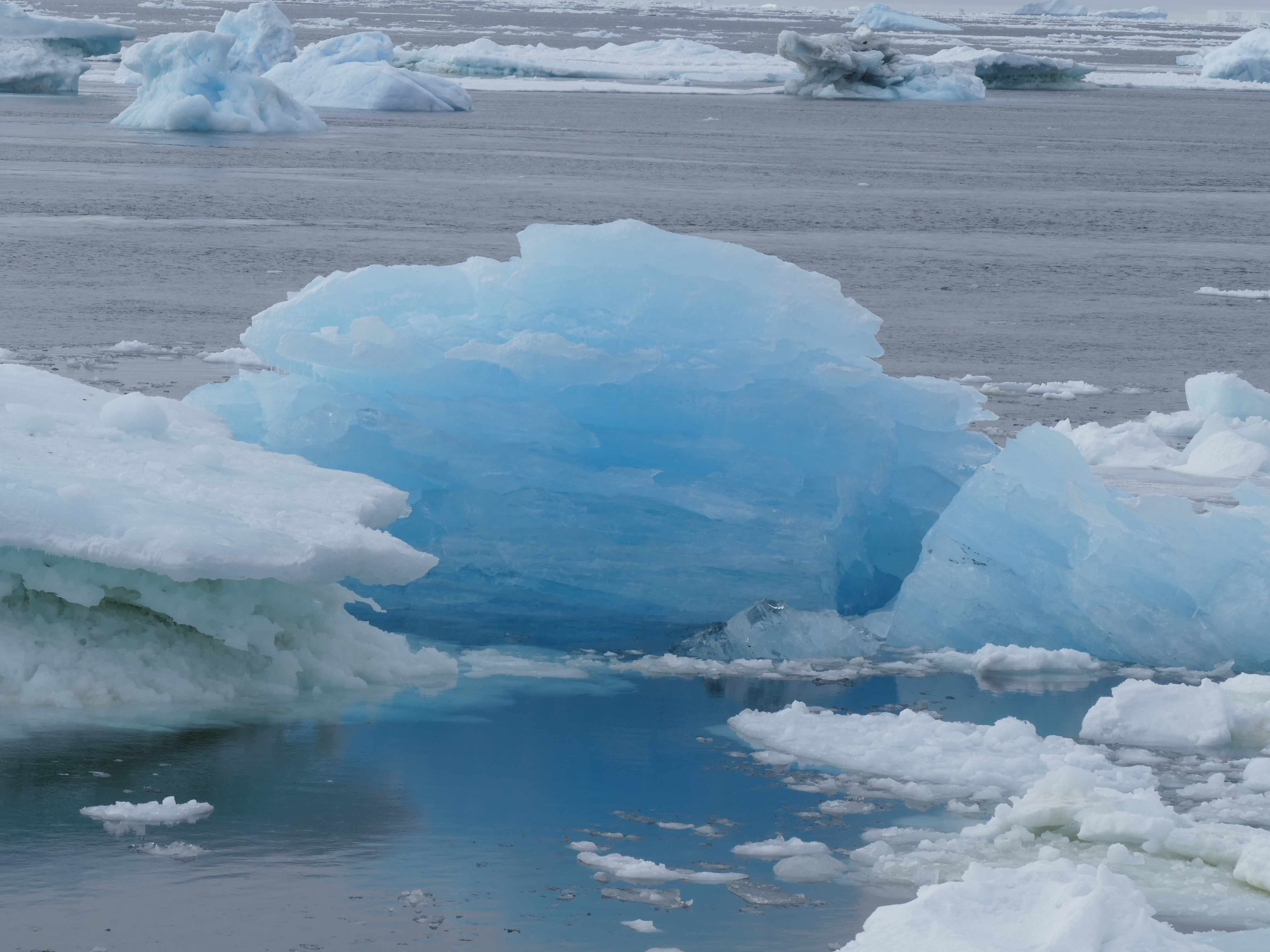 Icebergs melting in the Weddell Sea