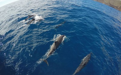 Will We See Dolphins?