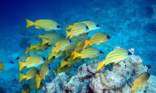 five-caves-snorkeling-maui-hawaii