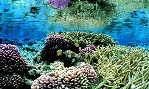 Coral_gardens_underwater_landcape_scenic