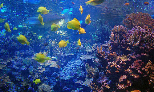 tropical-fish-in-maui