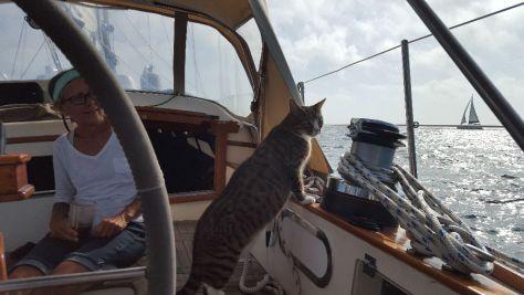 Yes Cat
