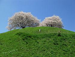 丸墓山古墳と桜
