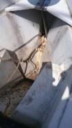 Un peu de nettoyage de la baille de mouillage : il y avait bien 2 cm de saleté dans le fond.