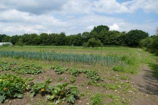 Fields at Kattendorfer Hof