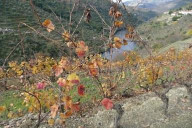 Douro valley vineyard