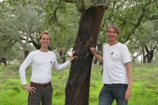 The cork oaks