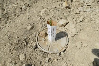Seedling doing well in barren ground