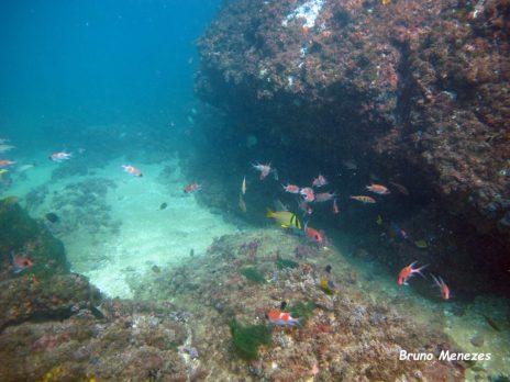 Fish love shipwrecks - Picture by Bruno Menezes