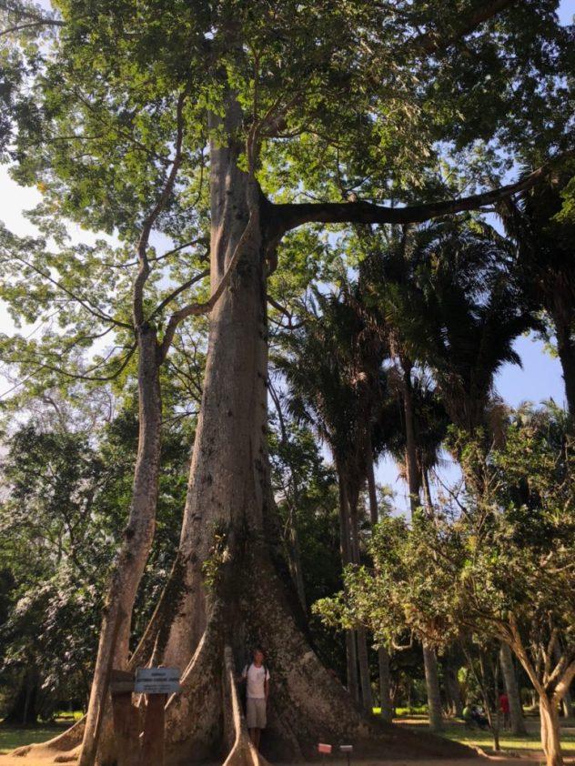 Impressive tree