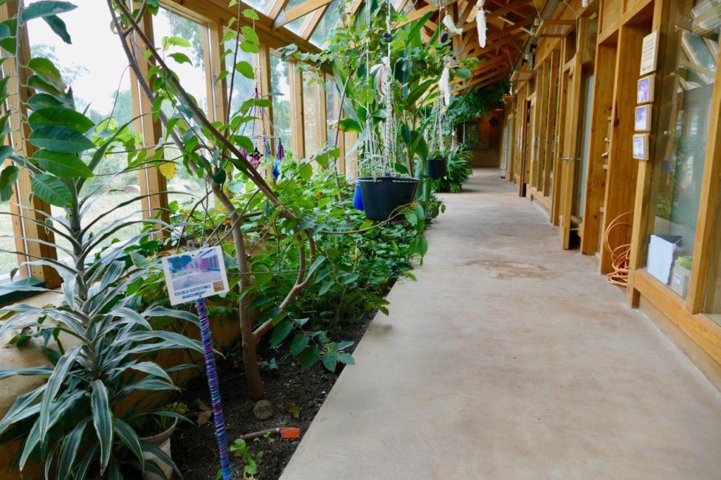 Edible plants hall