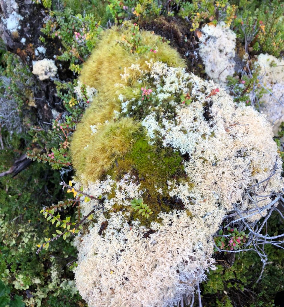 Mosses everywhere