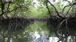 Mangroves on the border between land and sea
