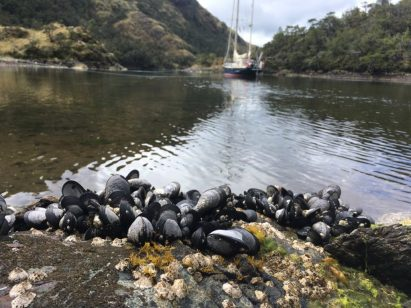 Tempting but dangerous mussels in Caleta Cinco Estrellas