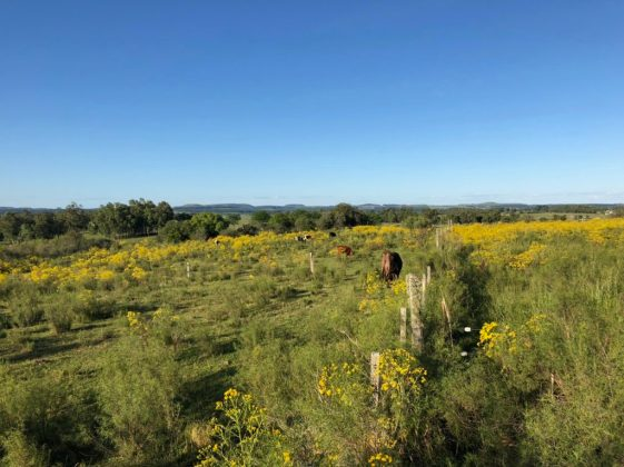 Alda's cows on poison-free rotation meadows