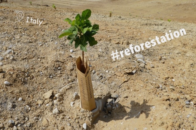 Sustainable Solution 25 - Reforestation