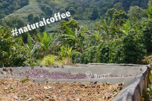 Sustainable Solution 36 - Natural Coffee using agroecology