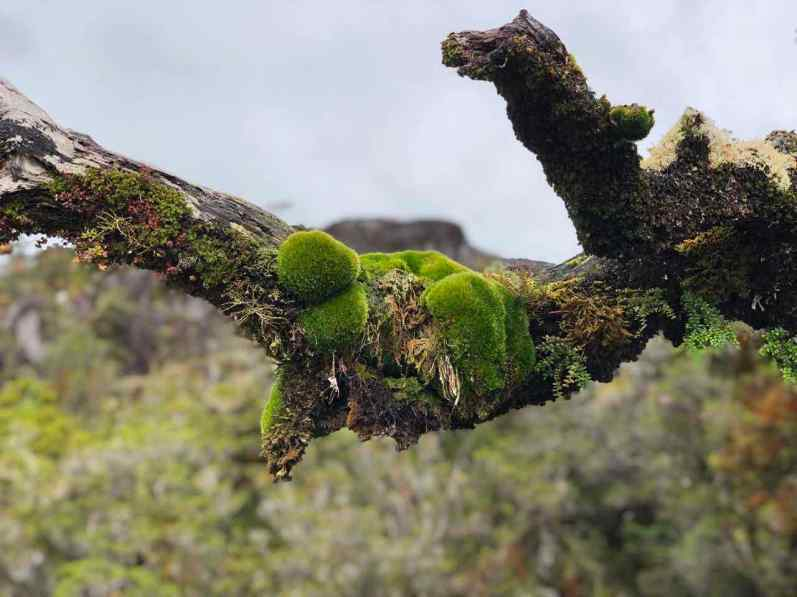 Moss growing on branch in Patagonia