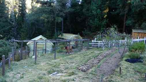 Organic farming amongst the trees