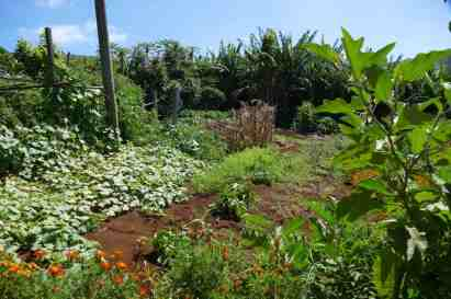 Growing your own veggies and fruits