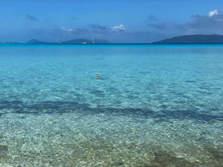 Black tip reef shark swimming close to the beach