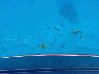 Moored in an aquarium