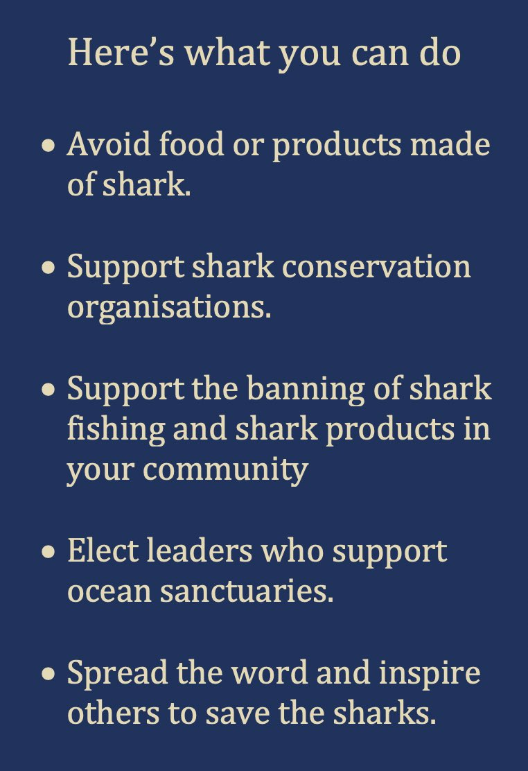 What You Can Do - Shark Protection