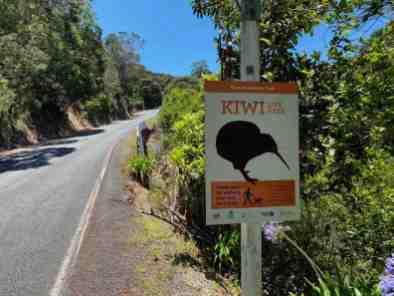 Will we see Kiwi?
