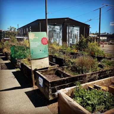Moveable mini-gardens at Daldy Street Community Garden