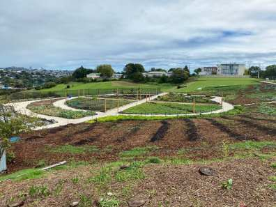 Orakei's large community garden in Auckland is taking shape