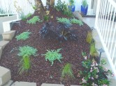 Mulched Area