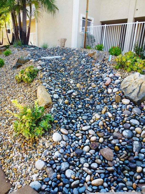 water wars xeriscaping in southern