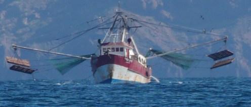 Sonora Shrimp Trawler 1