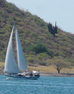 sailing-bahia-san-carlos