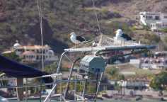 Gull on Solar Panels 2