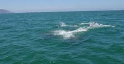 Dolphin Group San Carlos